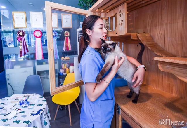 与宠物相关的消费市场正在成为新的经济增长点